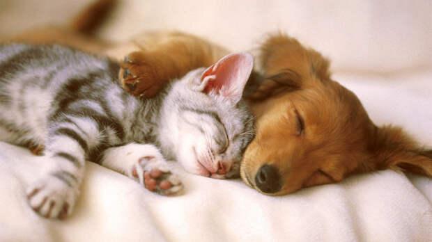 Кот, собака и роды