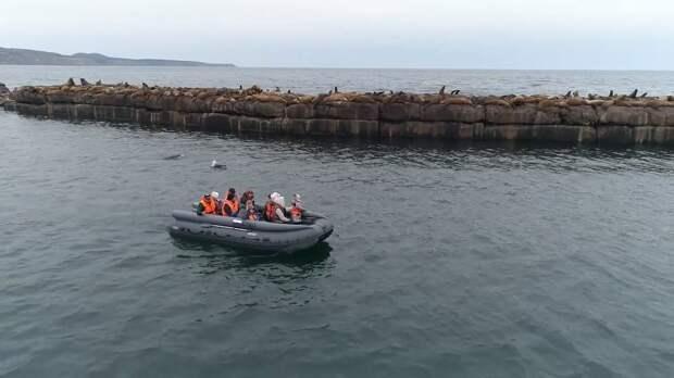 Туристов на Сахалине возят на морские встречи с сивучами