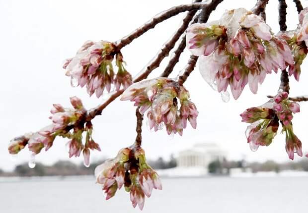 Зима недаром злится: Восточное побережье США в плену снежного шторма «Стелла»