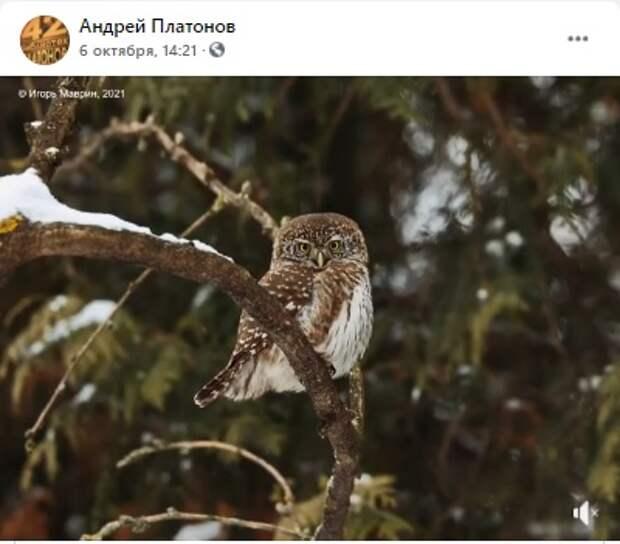 В библиотеке на Усиевича открылась фотовыставка «Птицы над городом»