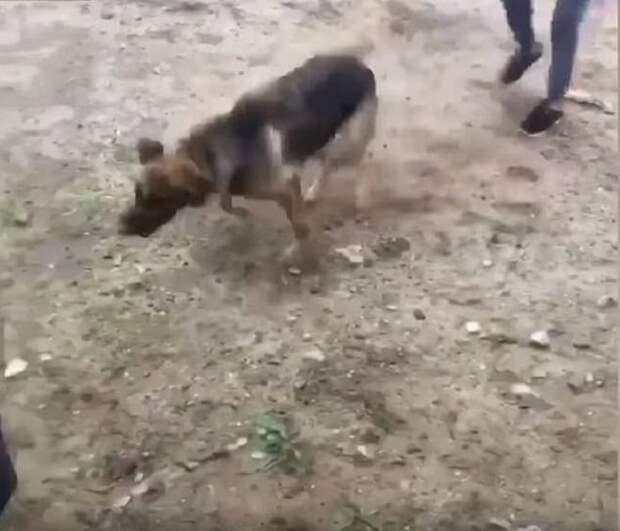 Собака стоит