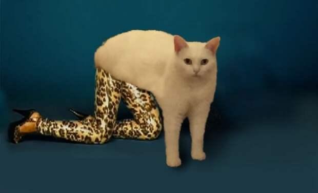 Забавно устроившийся наступенях кот стал героем фотожаб