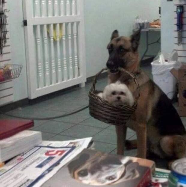 Смешные фото с животными от Михалыча!