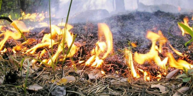 В России за сутки потушили больше 90 природных пожаров