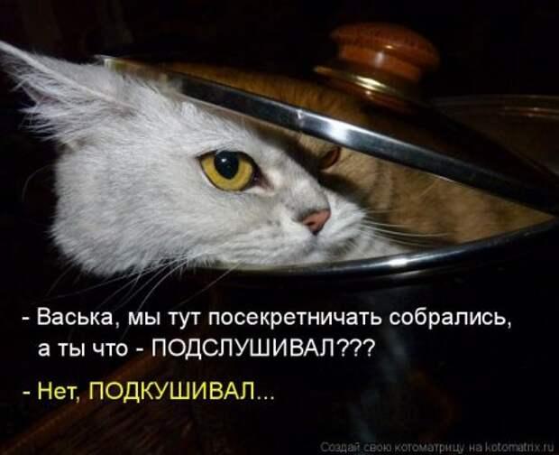 1451492495_kotomatritsa_j0