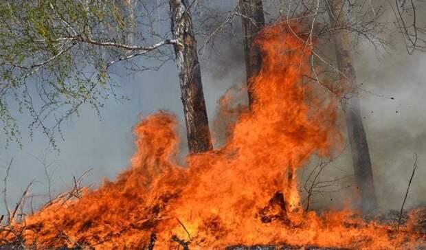 Засутки вТюменской области произошло 8 лесных пожаров, 18 продолжают действовать
