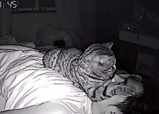 Парень установил в своей комнате камеру, чтобы заснять, что ночью делает его кошка