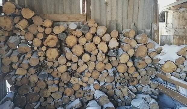 Оренбуржец из-за незаконной заготовки дров рискует угодить зарешетку