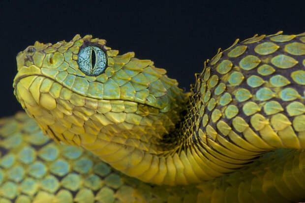 Нигерийская чиновница кормила миллионами змею