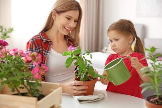 Лимон или хлорофитум? Вот какие растения выбрать для детской комнаты
