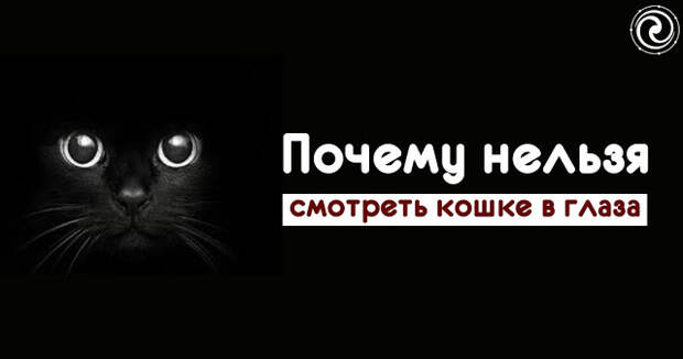 Почему нельзя смотреть кошке в глаза