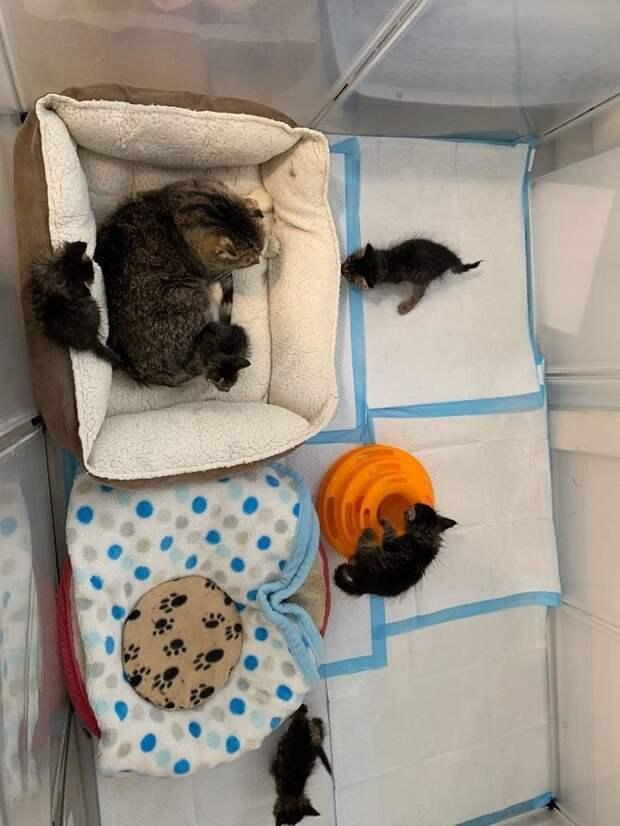 Одинокие котята встретили заботливого четвероногого «наставника»