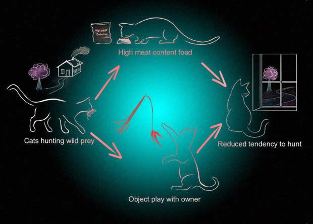 Игры с кошками помогли на треть снизить количество жертв от охоты
