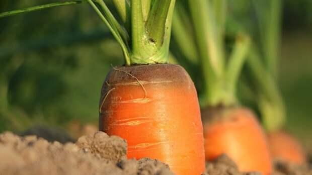Садоводам назвали самую благоприятную неделю мая для посадки лука и моркови