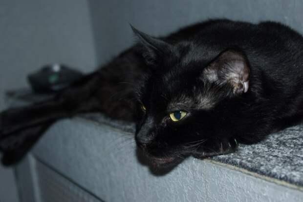 Мой кот хоть и сволочь - но любимая!