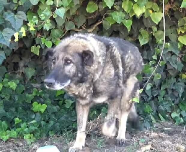Старенького пса выбросили на произвол судьбы, и он одиноко сидел в тени растений