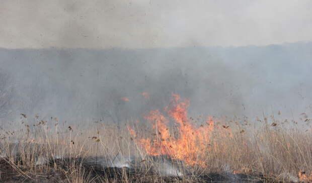 Синоптики предупреждают опожароопасной ситуации вВолгоградской области
