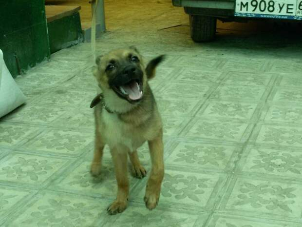 Волонтеры думали, что отдали щенка в добрые люди, но спустя 2 месяца забрали пса собака, хозяева, щенок