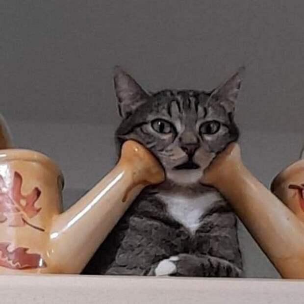 20 кошковладельцев, которые никогда не сталкивались с дефицитом позитива в жизни