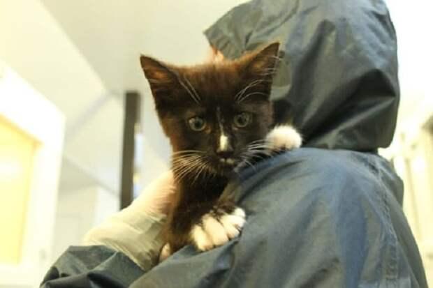 За маленьким больным котёнком ухаживали, а ему становилось всё хуже