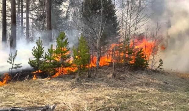 9 мая в одном из районов Оренбуржья прогнозируют пятый класс пожарной опасности