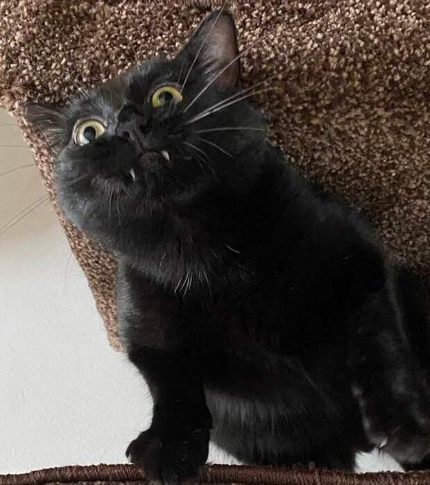 20 фотографий котов, которые решили показать всем свои зубы, но вызвали не страх, а только умиление