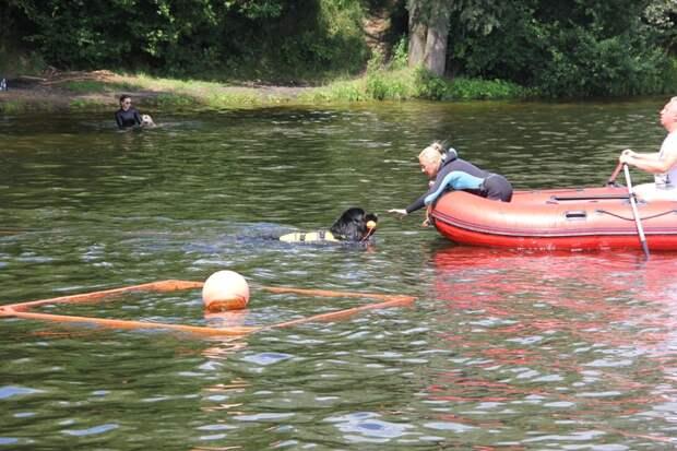 Собака в помощь: в столице прошла тренировка кинологов, сотрудничающих со спасателями