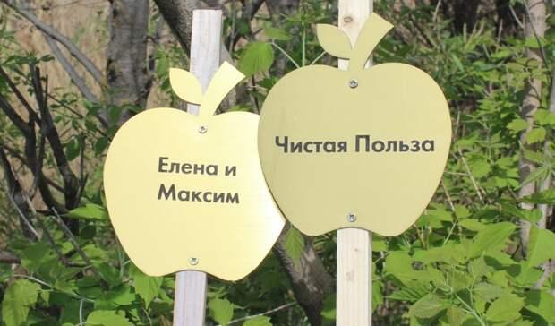 В Ижевске на Южной набережной появилась аллея из яблонь