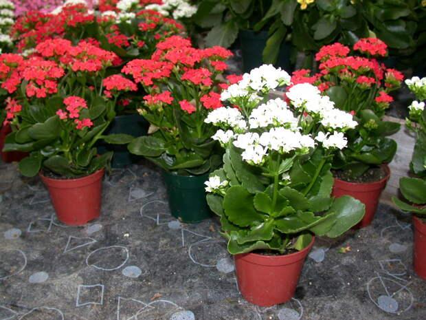 Удобрение для комнатных растений из пищевых отходов