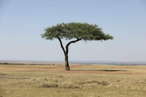 ТОП-5 самых одиноких существ и вещей на планете