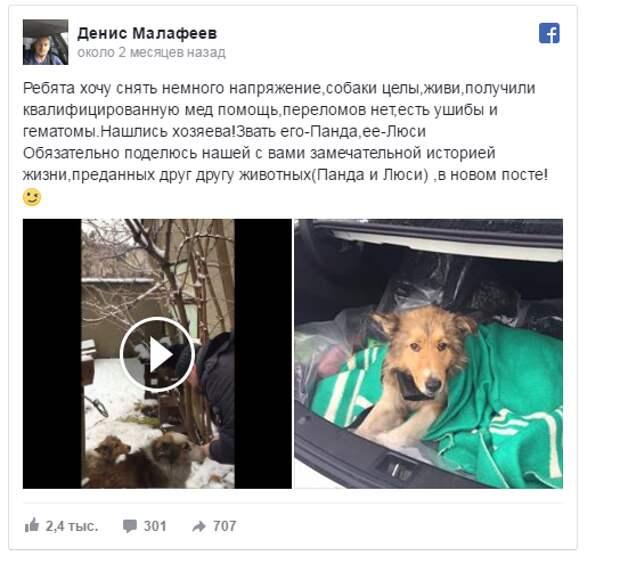 Собаку травмировал поезд… Но двое суток ее охранял верный друг-пёс!