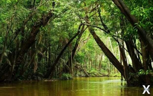 Так выглядят экваториальные джунгли