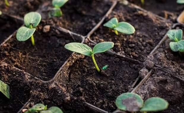 На ошибках учатся - четыре распространенные ошибки при выборе семян