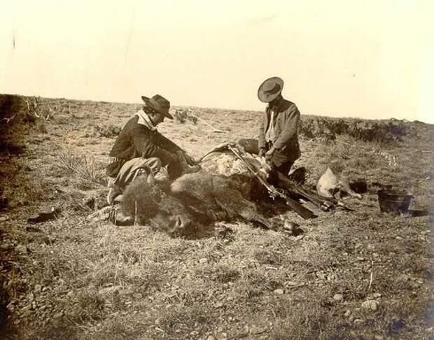 Добыча шкуры бизона. Округ Тейлор, штат Техас. Фото сделано в 1874 году