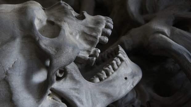 Жители Всеволожского района нашли останки погибших во время ВОВ людей