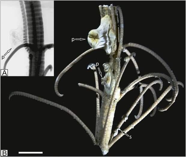 Найдены существа, которых считали вымершими 270 миллионов лет назад