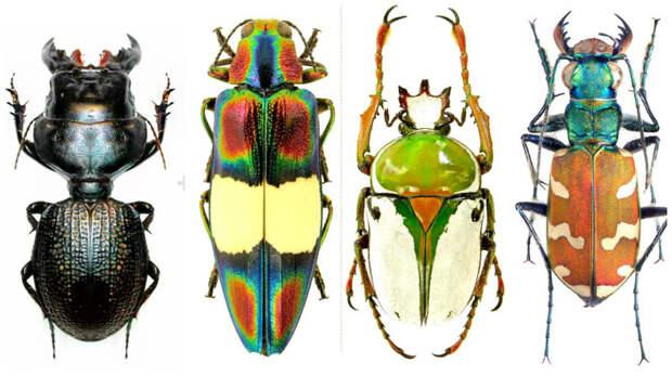 Очень красивыми жуки, интересное, красивое, насекомые