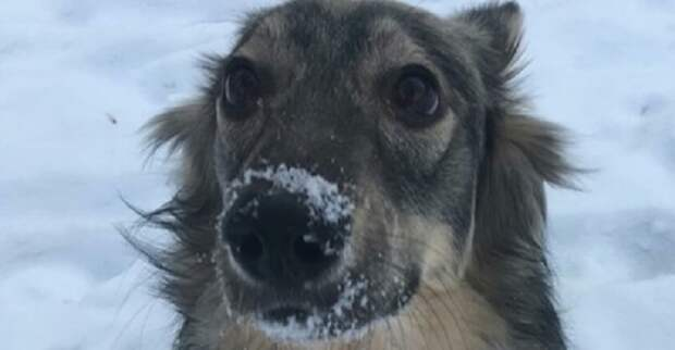 Девушка мечтала о породистой собаке, но увидев в приюте спящего щенка, сердце ее дрогнуло
