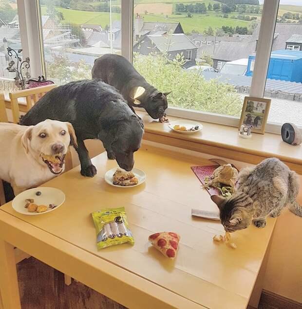 День рождения животные, жизнь, мир, роскошь, собака, удобство, фото
