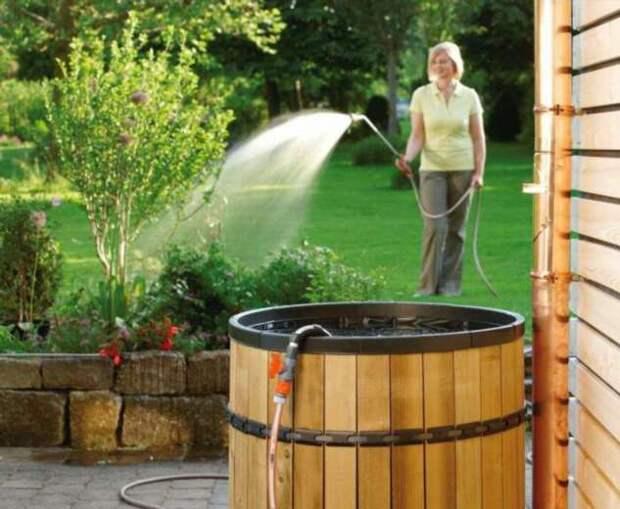 Что делать, чтобы вода в бочке на участке не зацвела: 3 простых и эффективных правила