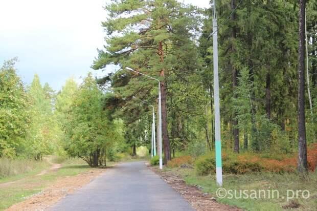 Почти 100 случаев нападения клещей зарегистрировали в парке Кирова в Ижевске