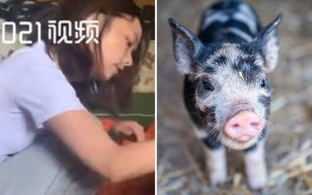 Китаянка завела мини-пига и вскоре поняла: питомцу нужна отдельная комната