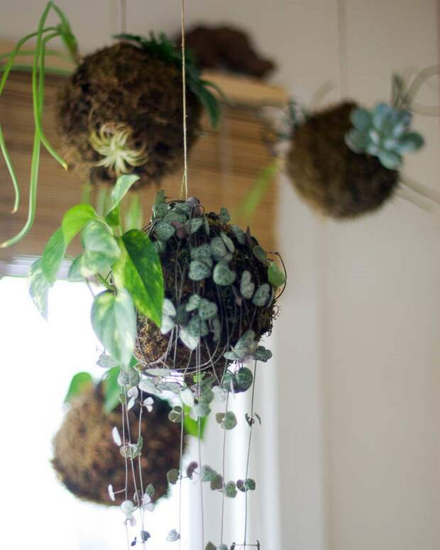 декоративные домашние растения