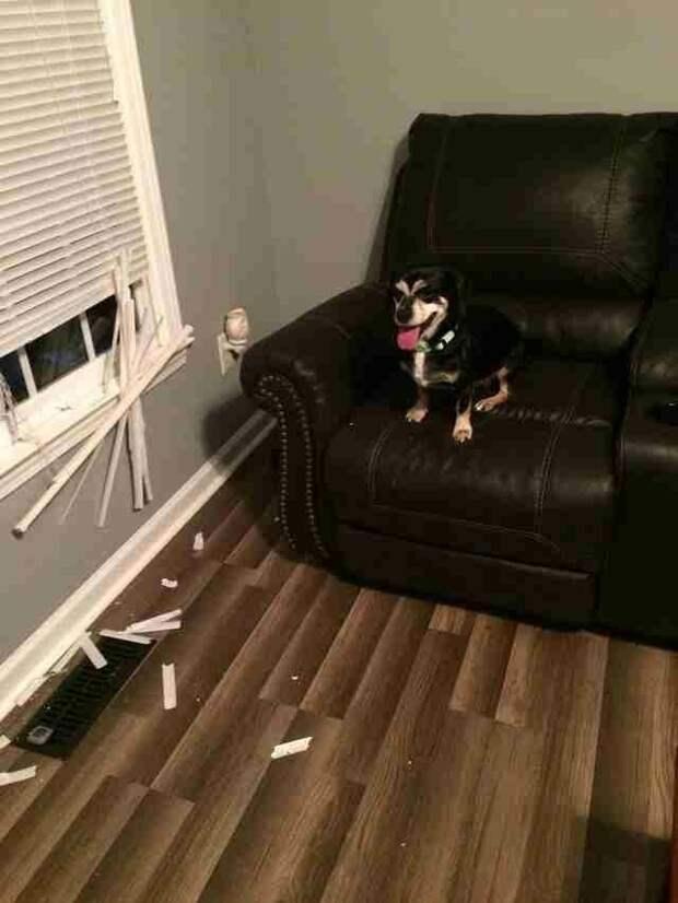 По словам новых владельцев, в первую неделю Джаспер был настоящим ангелом, но затем решил немного «поиграть». Но это мелочи. Главное, что теперь у него есть любящая семья в мире, животные, люди, преданность, приют, собака, спасение
