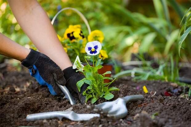 Август - самое время сажать цветы!
