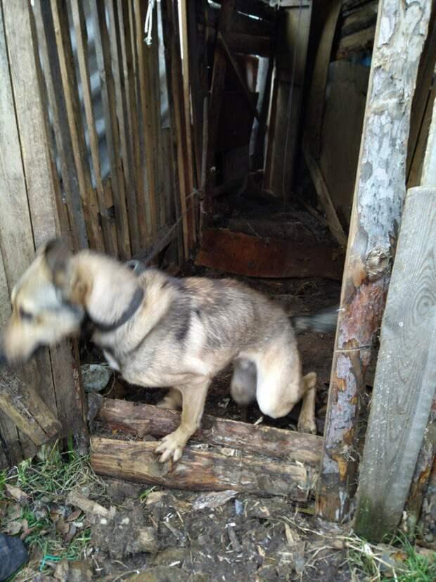 собака в сарае