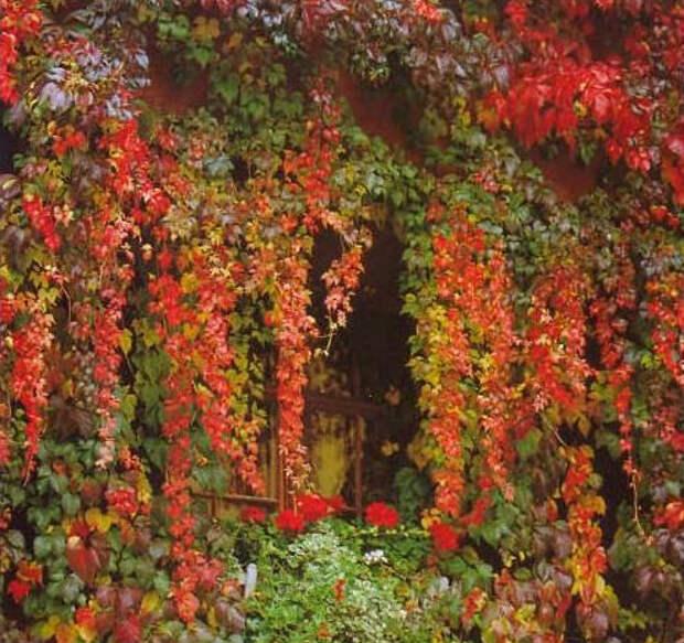 Фото №9 - 10 растений для ленивых садоводов