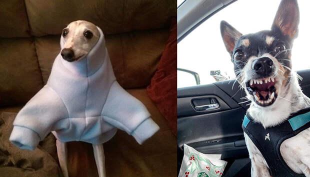 Забавные фото собак, которые попали в нелепую ситуацию