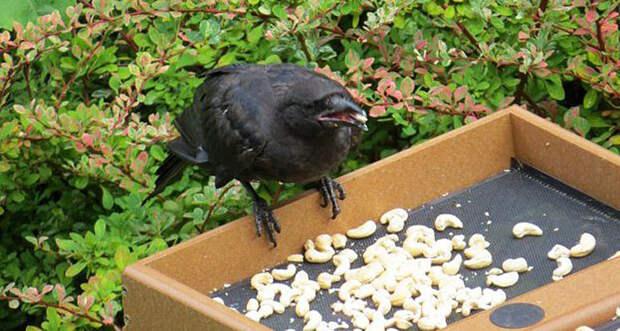 Птицы чудесным образом отблагодарили девочку за доброту