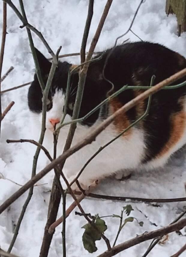 Котёнок выживает под старым заброшенным сараем в парке на окраине Петербурга!!! Очень просим вашей помощи!